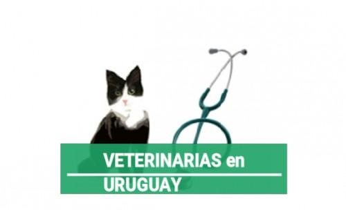 Veterinarias en Uruguay