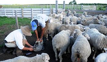 Gobierno destinará 27 millones de dólares a programas para pequeños y medianos productores rurales