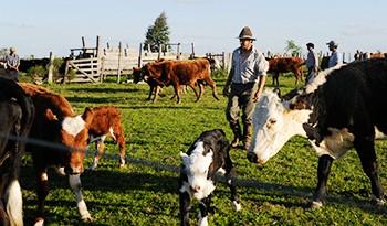 Colonización abrió 15 llamados para arrendamiento de 1.793 hectáreas de producción lechera y ganadera