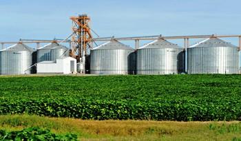 China es el principal destino de la soja uruguaya