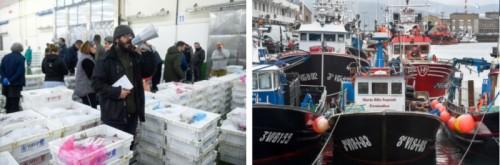 Una nueva forma de hacer las cosas en el mayor puerto pesquero de Europa