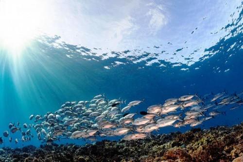 Si comemos más pescado que nunca, debemos cuidar nuestros océanos como nunca