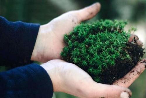 Apoyo a la recuperación verde mediante el despliegue de tecnologías climáticas