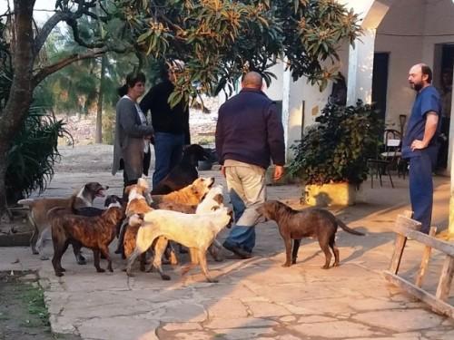 Quinta jornada de castración e identificación canina se realizó en Melo