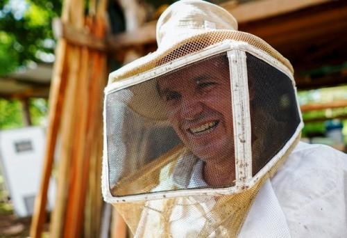 Dulces sueños hechos de abejas