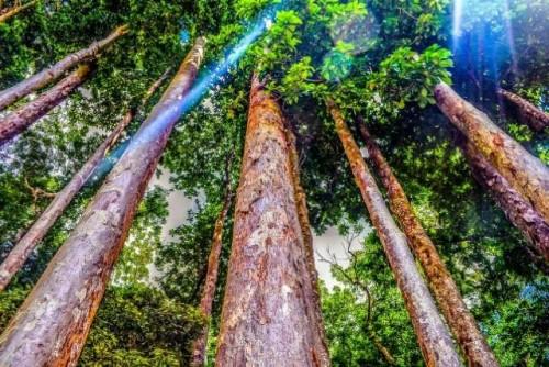 Mejores datos, mejores decisiones y mejores bosques