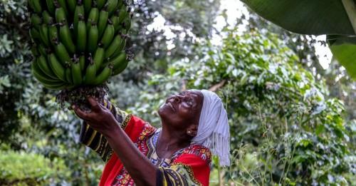 La financiación holandesa al FIDA ayudará a evitar la crisis alimentaria del COVID-19