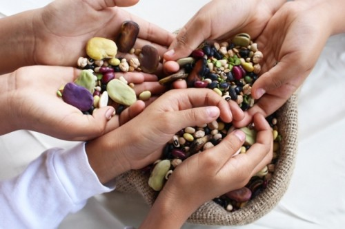 Las semillas nutritivas de la naturaleza