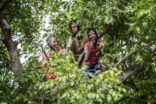 Día Internacional de los Bosques marcado en una ceremonia virtual de alto nivel