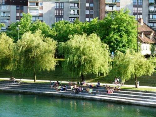 La Fundación Arbor Day y la Organización de las Naciones Unidas para la Agricultura y la Alimentación (FAO) reconocen 120 ciudades arbóreas del mundo