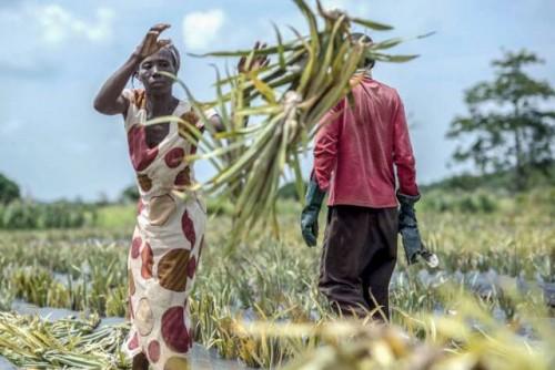 Los pequeños agricultores familiares producen un tercio de los alimentos del mundo