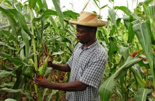 Food Coalition gana impulso a medida que la seguridad alimentaria se incluye en la agenda del G20