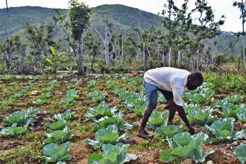 El Informe Global sobre Crisis Alimentarias advierte del preocupante aumento de la inseguridad alimentaria aguda en 4 países de Centroamérica y Haití