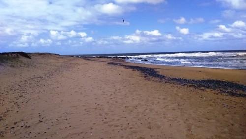 Uruguay en las Convenciones Internacionales sobre Biodiversidad