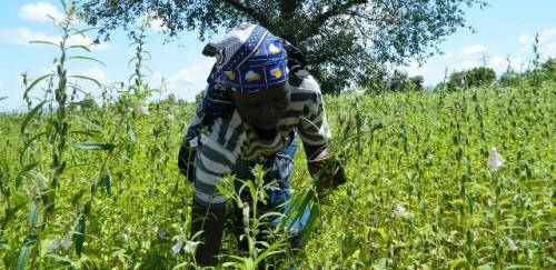 Los pequeños productores de la República de Sudán del Sur reciben apoyo del FIDA para salvaguardar sus medios de vida ante la crisis de la COVID-19