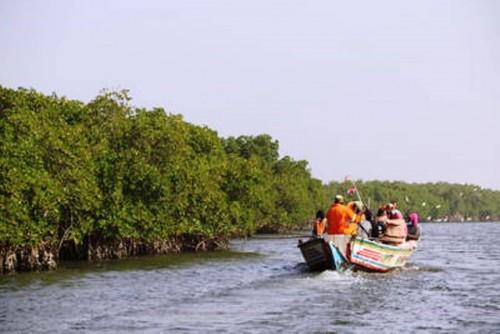 La magia de los manglares