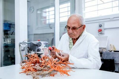 El futuro del precioso coral rojo en el Mediterráneo