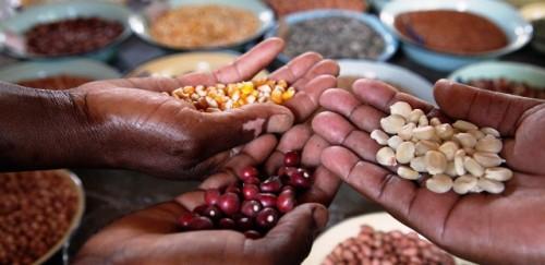 Situar la alimentación y la agricultura en el centro del marco mundial de la diversidad biológica